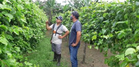 Visita Técnica aos Agricultores